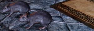 Dragon Age Rat